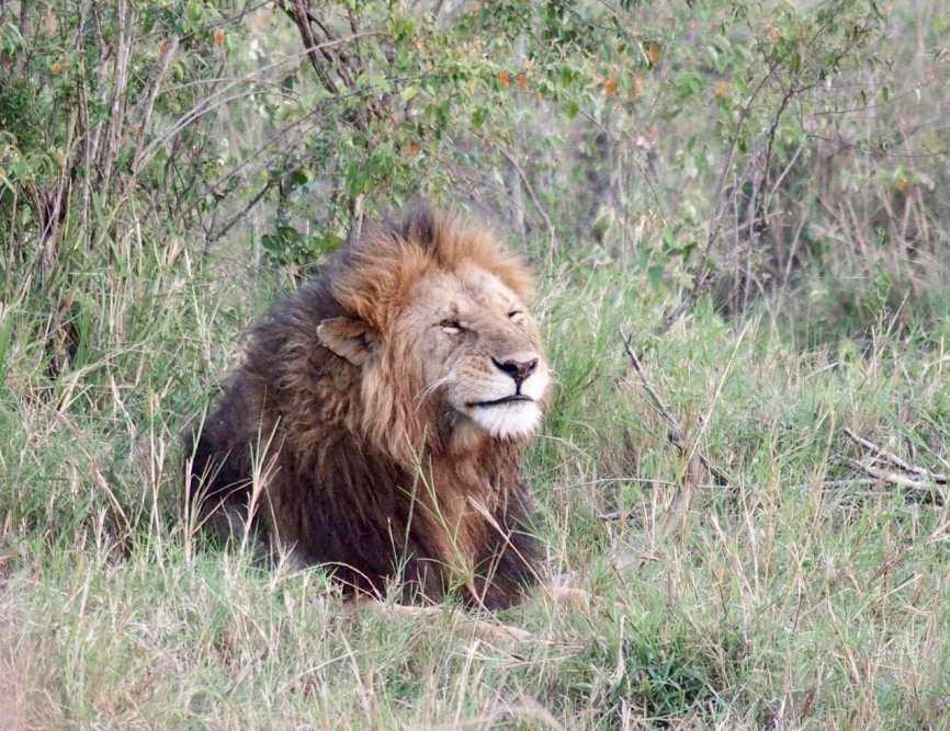Safari Lodge Review: Angama Mara in the Maasai Mara, Kenya