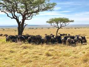 Just Checked Out: andBeyond Bateleur Camp, Maasai Mara