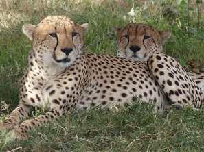 Just Checked Out: Elephant Pepper Camp, Masai Mara Kenya
