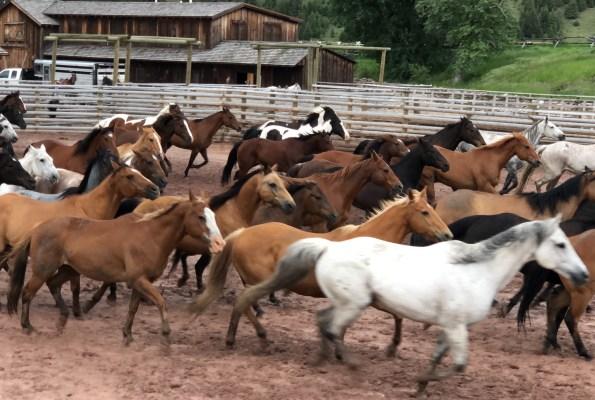 Review: Ranch At Rock Creek, Montana