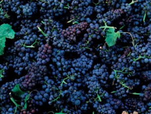 ENGLISH EDITION : Making wine without adding sulphur