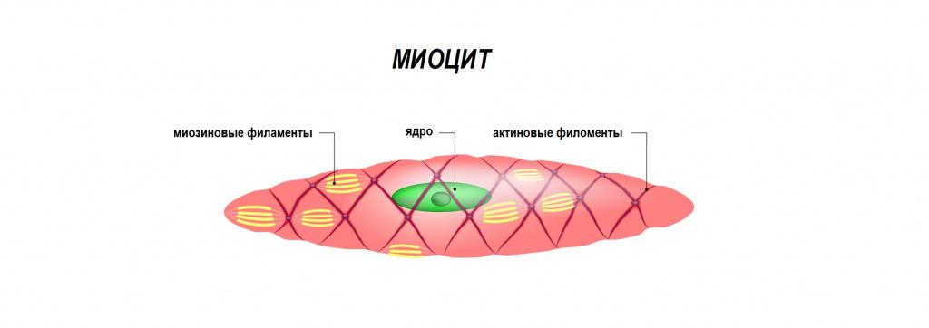 خوب، در موارد شدیدترین، RabboMioliz ممکن است توسعه یابد. خوشبختانه این اتفاق می افتد