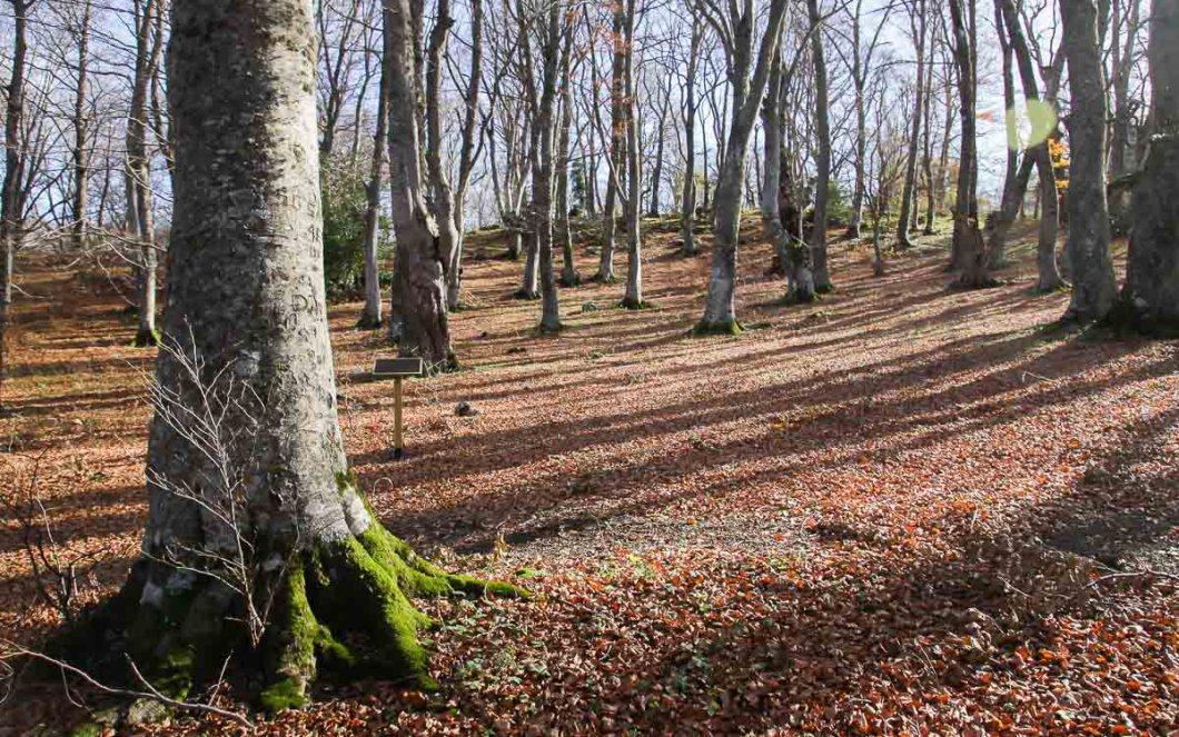 Abruzzo Bosco di Sant'Antonio   Foliage autunno