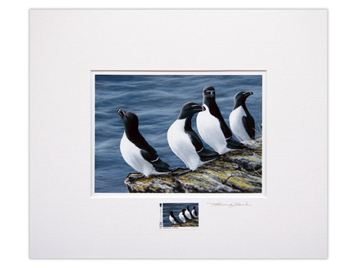 Coastal Birds of the Isle of Man by Jeremy Paul Stamped and Signed     The beauty of the Coastal Birds of the Isle of Man stamps is amplified by  these magnificent prints  These prints  on archival matte paper using  light fast