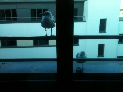 Seagulls at a window.