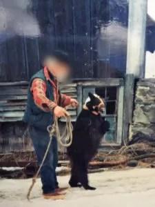 Cuccioli di orsi incatenati per ore al muro