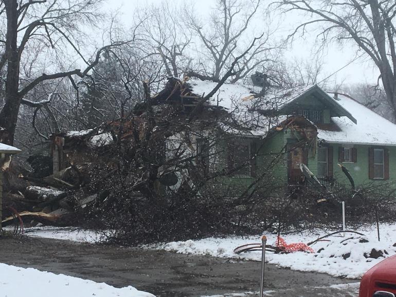 Sioux City Iowa Tree Down