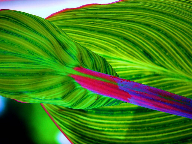 Biodiversity - Plant