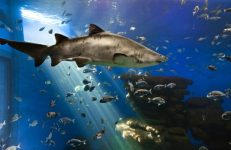 La grande vasca con gli squali del Palma Aquarium , l'acquario piu grande d'Europa