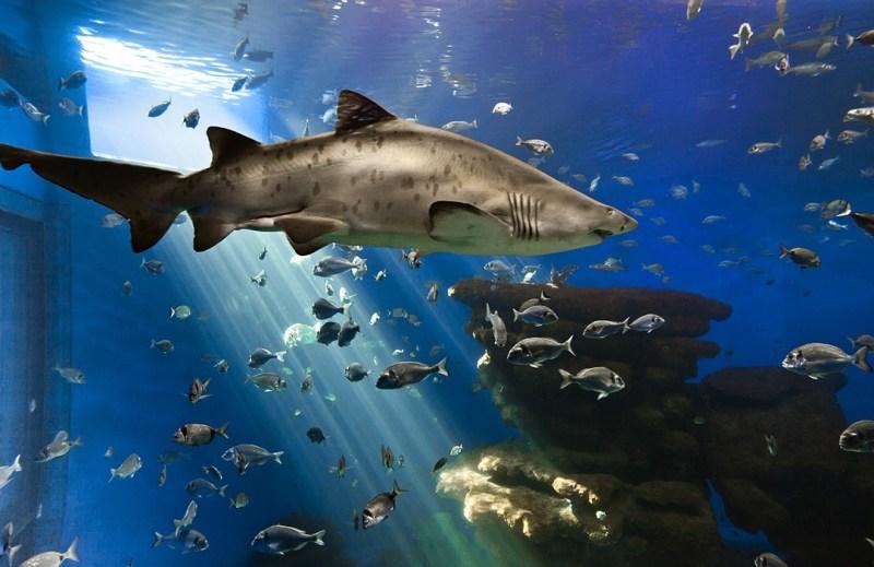 La grande vasca con gli squali del Palma Aquarium, l'acquario piu grande d'Europa
