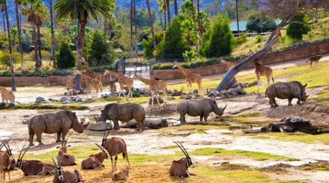 Uno degli habitat del San Diego Zoo Safari Park in California