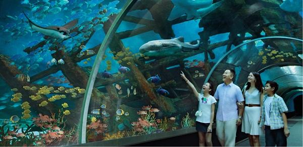 L'acquario SEA Aquarium di Singapore