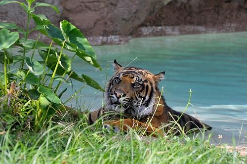Per il caldo infernale di questi giorni, al Bioparco di Roma piscine e ghiaccioli per gli animali