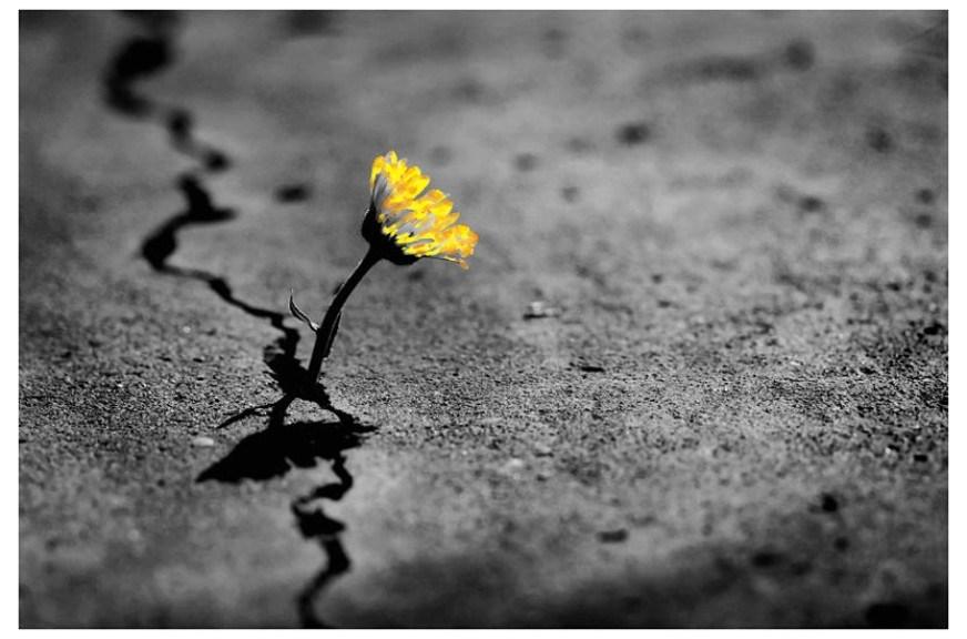 Resultado de imagen para de las cenizas nace una flor