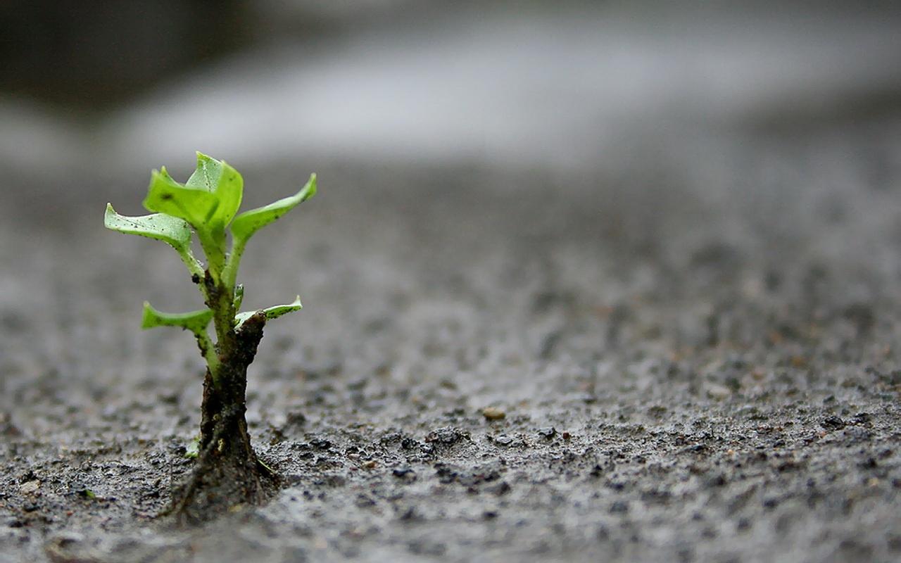 semilla-germinando-1