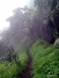 Jungle road to peak of fort