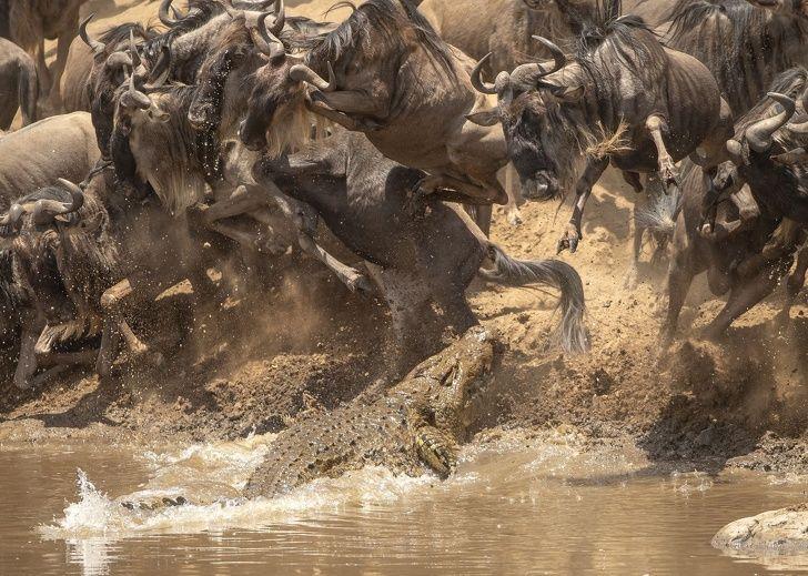 National Geographic Vient Dannoncer Les Meilleures Photos