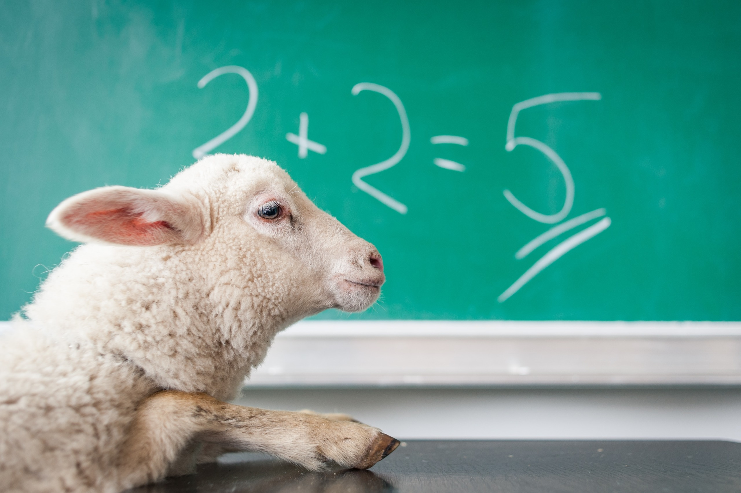 Dumb Lamb in front of chalkboard funny for mail privacy protection