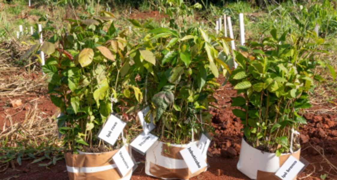 Itaipú contribuye a la regeneración vegetal