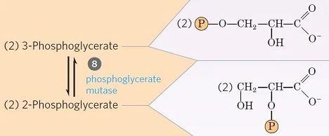 Isomerización de 3-fosfoglicerato