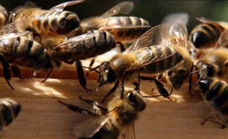 Tienen abejas para atacar a ladrones