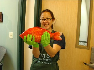 giant goldfish