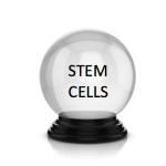 stem cell crystal ball