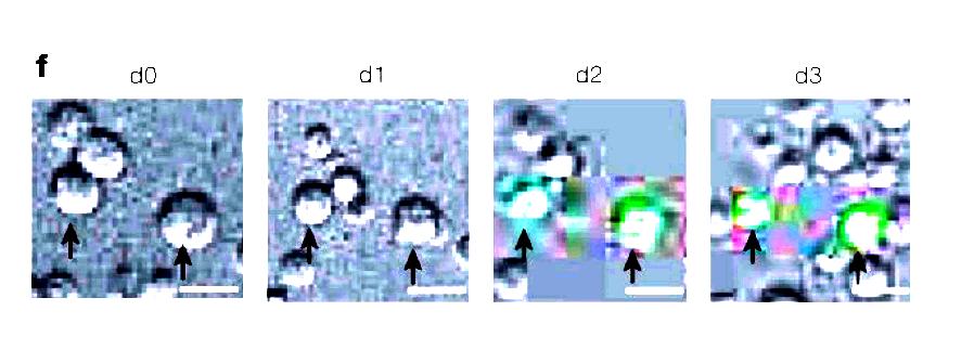 Fig. 1g rectangles