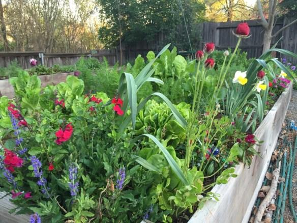more scientists garden