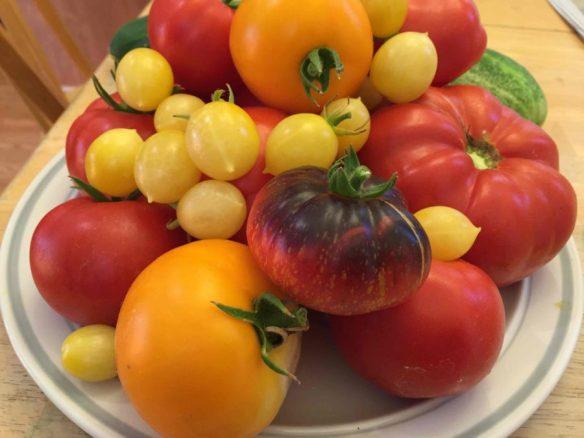 Paul's tomatoes