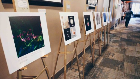 Entries for this year's Cells I See art contest on display.