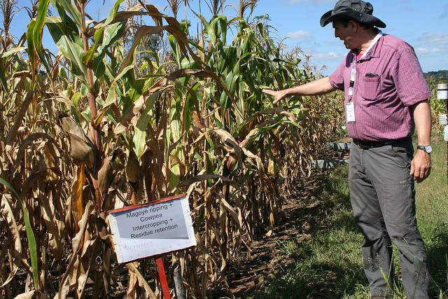 Dr. Christian Thierfelder from CIMMYT explains the multiple benefits of 'climate-smart agriculture', in conservation agriculture plots with a maize-cowpea intercropping system outside Harare, Zimbabwe. Credit: Busani Bafana/IPS