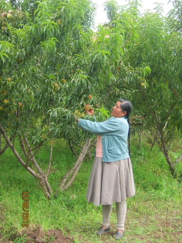 Isabel García Champa next to  one of the apple trees on her small family farm in the Peruvian  region of Cuzco. Credit: Katherine Pozo/IPS