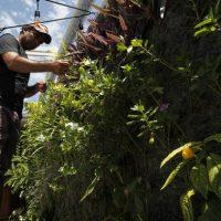 Ciudades cubanas carecen de opciones sostenibles en energía
