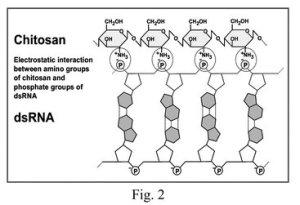 double-stranded RNA