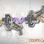 """CRISPR/Cas9 Editing of the Genome"" by National Human Genome Research Institute (NHGRI). Licensed under CC BY 2.0."