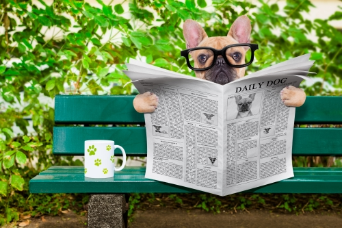 https://depositphotos.com/80038942/stock-photo-dog-reading-newspaper.html