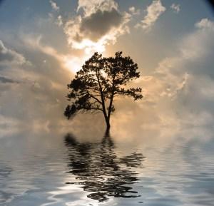 https://depositphotos.com/29485305/stock-photo-one-tree-on-water-sunset.html
