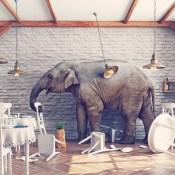 https://depositphotos.com/88648926/stock-photo-the-elephant-in-a-restaurant.html