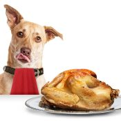 https://depositphotos.com/174205416/stock-photo-hungry-dog-with-thanksgiving-turkey.html