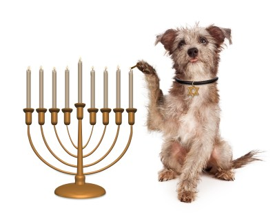 https://depositphotos.com/92991434/stock-photo-dog-lighting-hanukkah-menorah.html