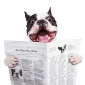 https://depositphotos.com/58643025/stock-photo-funny-french-bulldog-reading-newspaper.html