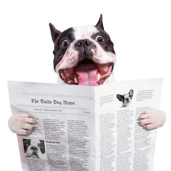 https://depositphotos.com/58643025/stock-photo-funny-french-bulldog-reading-newspaper.html