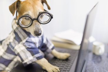 https://depositphotos.com/357481154/stock-photo-adorable-dog-working-project-online.html