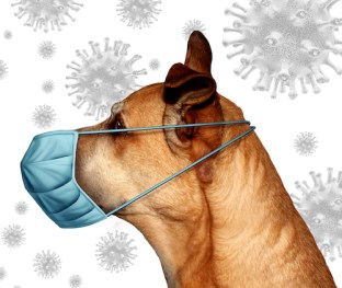 Veteriarian dog and cat as Coronavirus pets wearing a surgical mask to protect from virus infection or veterinary hygiene health care symbol with 3D illustration elements.