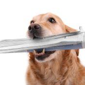 https://depositphotos.com/3726250/stock-photo-dog-news.html