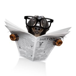 https://depositphotos.com/purchased.html?backURL%5Bpage%5D=%2Fstock-photos%2Fnews-dog
