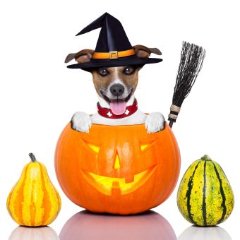 https://depositphotos.com/32519893/stock-photo-halloween-dog-as-witch.html