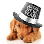 https://depositphotos.com/36527387/stock-photo-happy-new-year-puppy.html