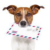 https://depositphotos.com/11492323/stock-photo-mail-dog.html